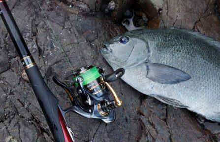 全ての釣りが上手くなる!?そのフカセ釣りとはどんな釣り?
